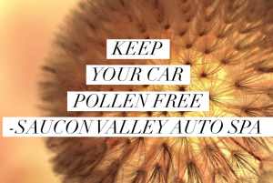 Keep Your Auto Pollen Free at Saucon Valley Auto Spa
